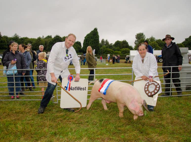 Hicks family champion pig 4