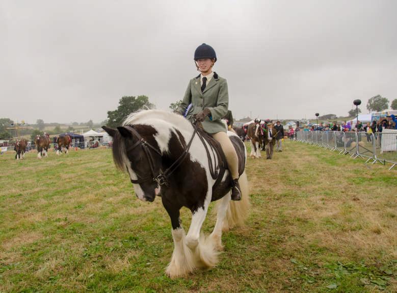 horse winner 2