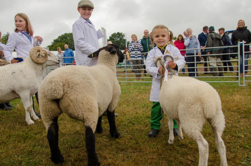 sheep classes 10