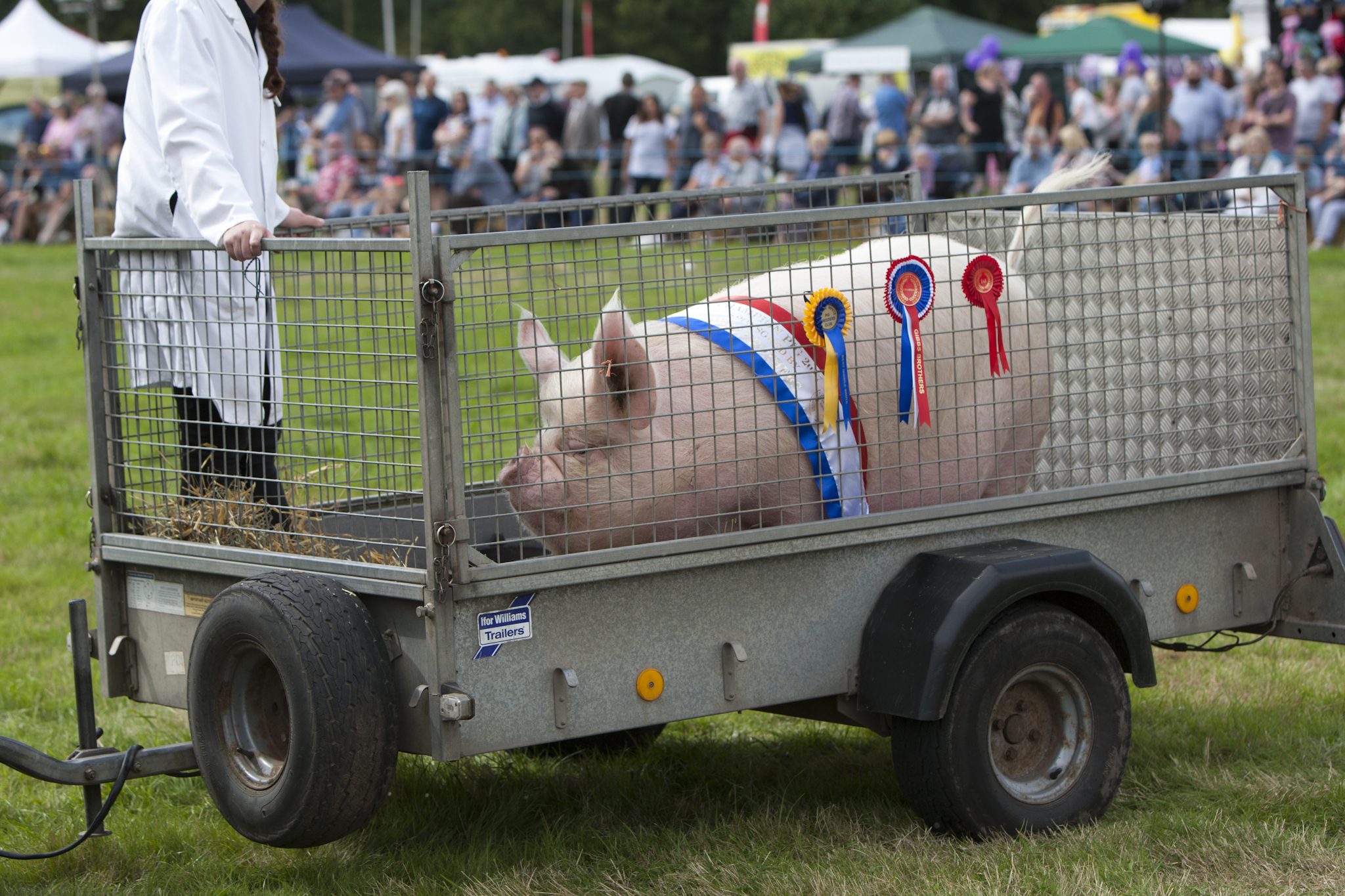 2017 Fillongley Show_111