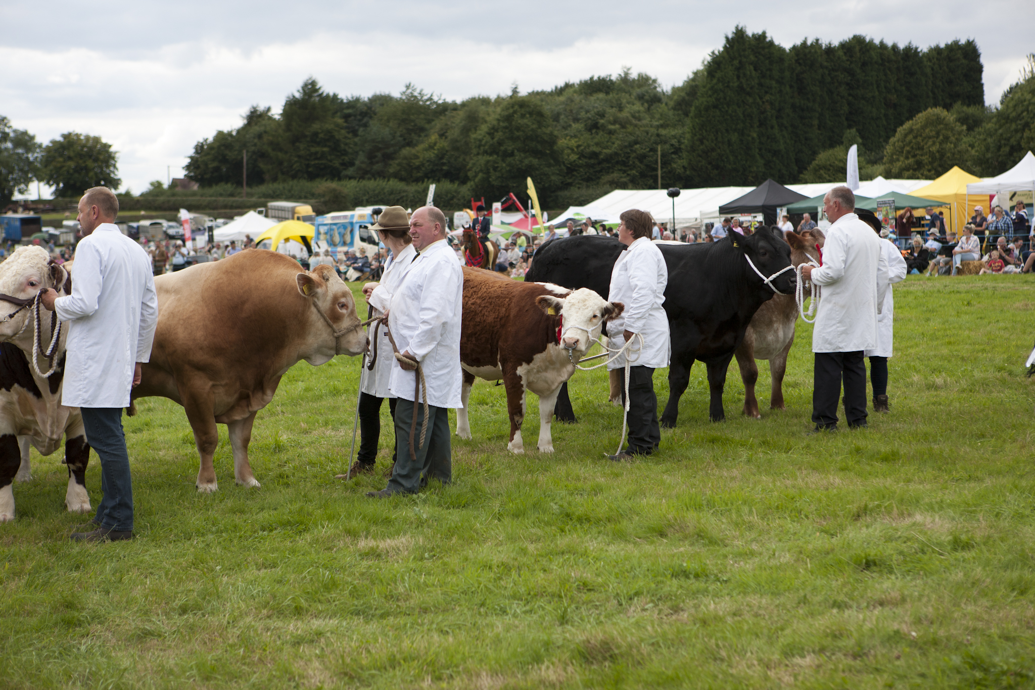 2017 Fillongley Show_15