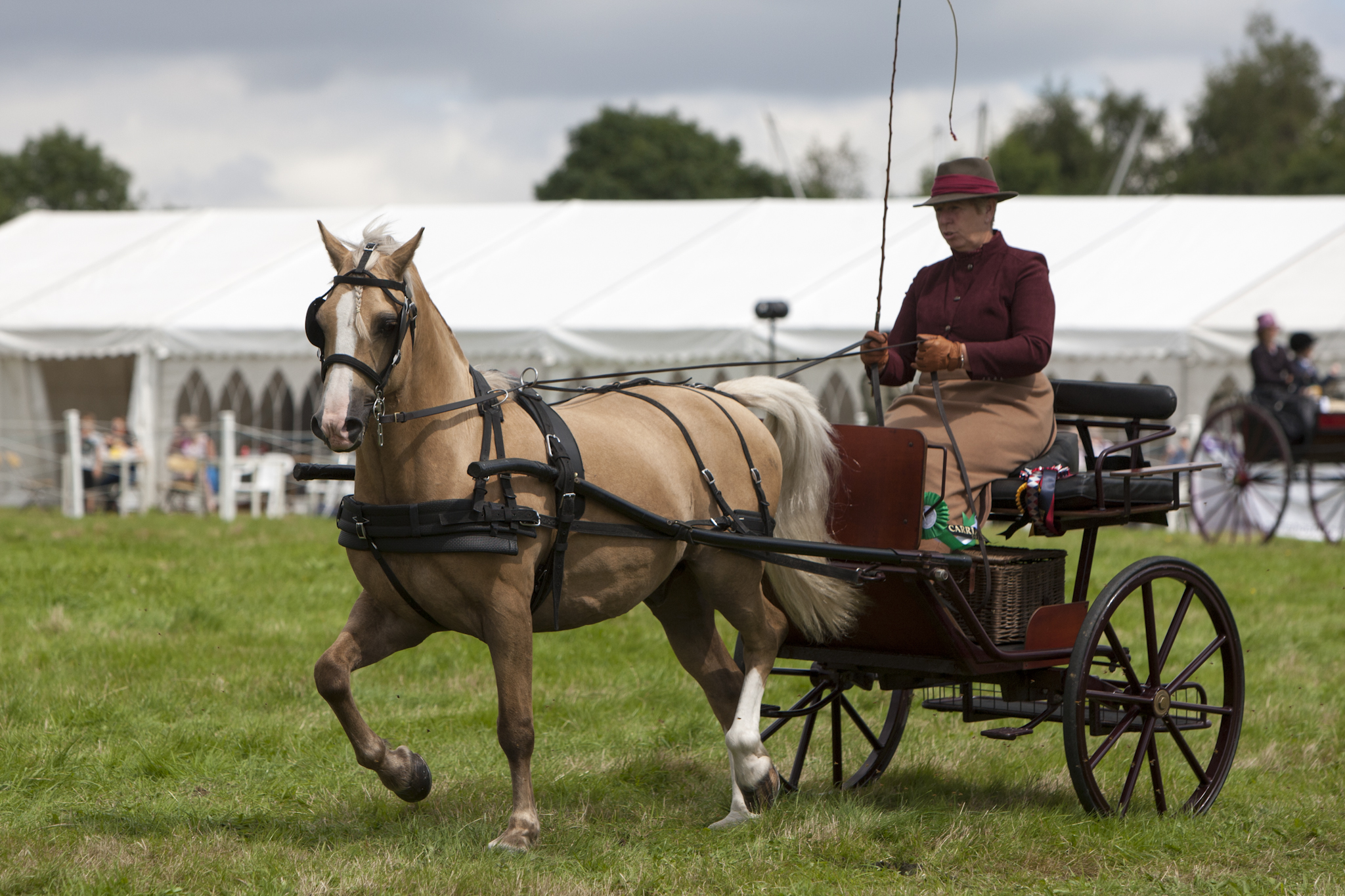 2017 Fillongley Show_56
