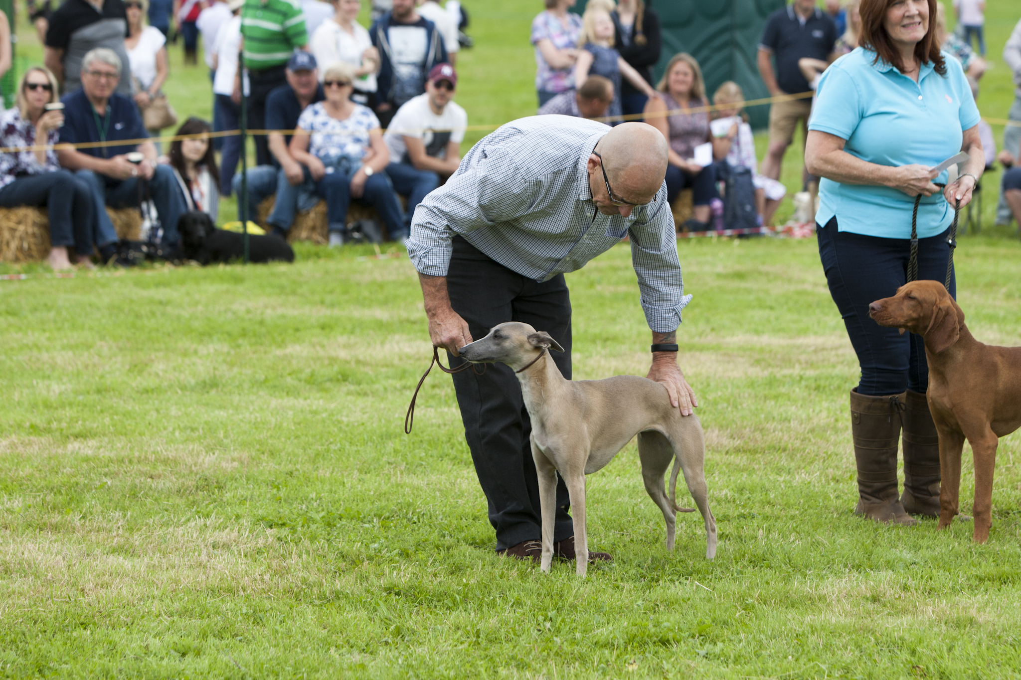 2017 Fillongley Show_69