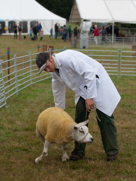Fillongley Show 2018_43
