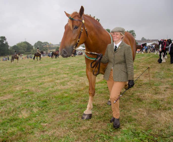 horse winner 5