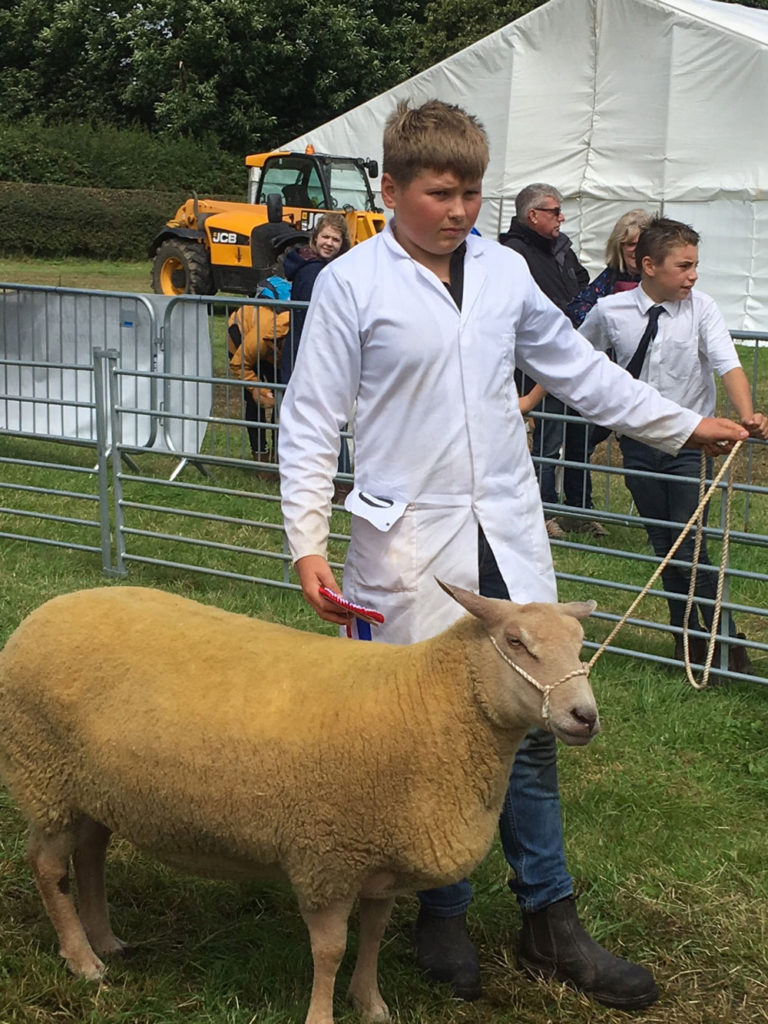 Reserve_Champion_Sheep-2019